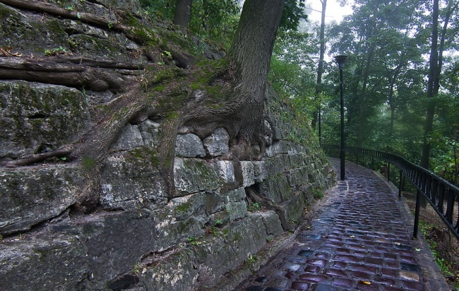 tree-07