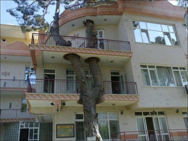 tree-09